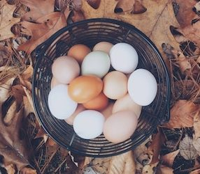Five Reasons to Diversify Your Fundraising